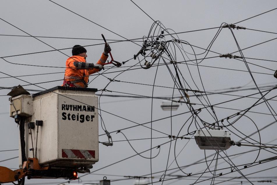 Kurios: Erdbeernetz sorgt für Stromausfälle
