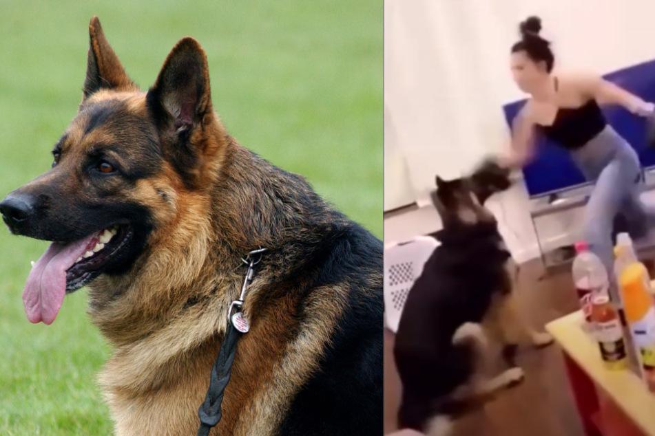 So brutal boxt diese Frau ihren Hund: Schock-Video geht viral
