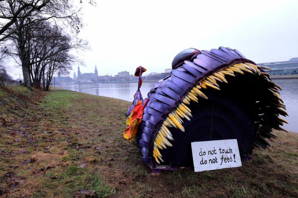 Dem Hochwasser entkommen: Lila Monsterfisch im Trockenen, Fähre Johannstadt eingestellt
