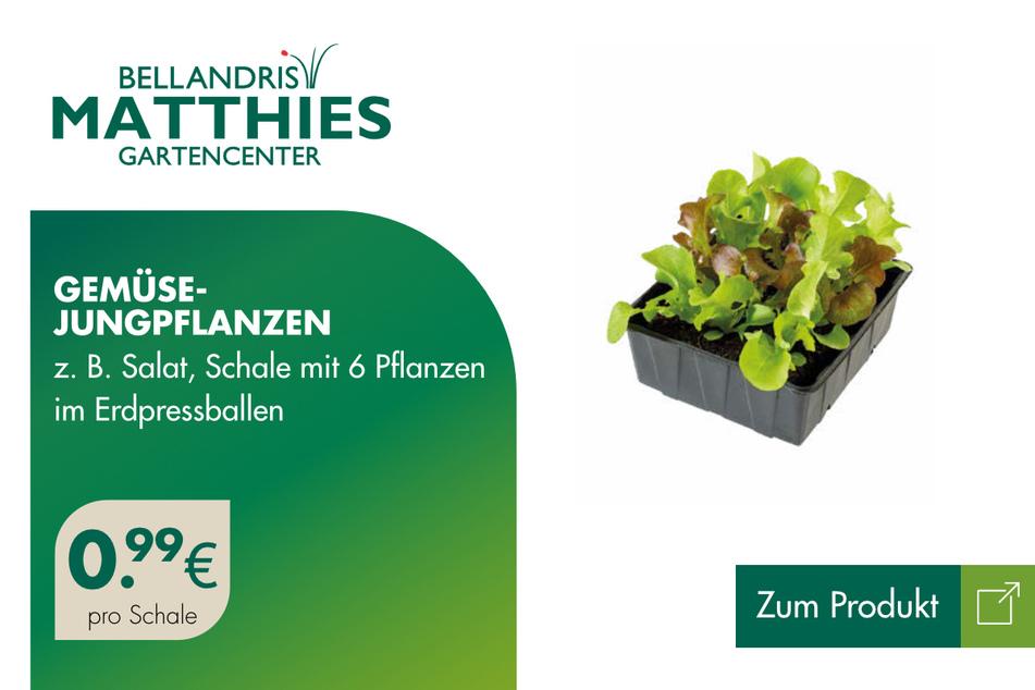 Gemüse-Jungpflanzen für je 0,99 Euro