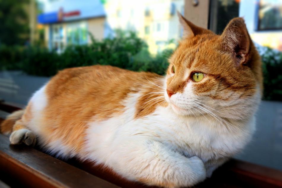 """Ihr liebstes """"Hobby"""": Katze fährt regelmäßig mit dem Bus"""