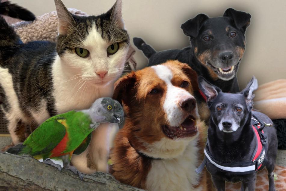 5 besondere Haustiere: Diese Hunde und Katzen suchen dringend ein neues Zuhause