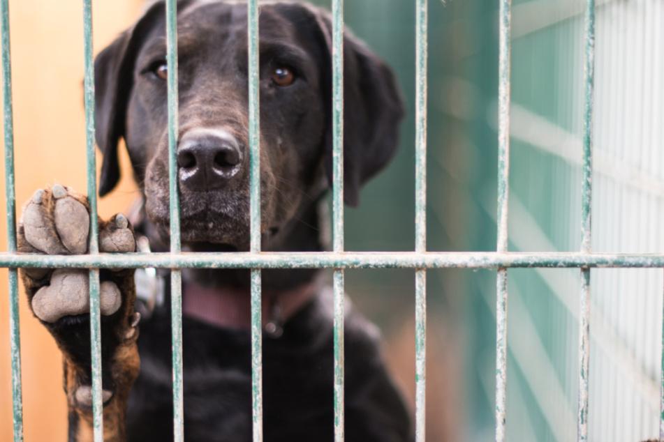 Stuttgart: Grausam: Fast 70 Hundewelpen aus Zuchtbetrieb beschlagnahmt