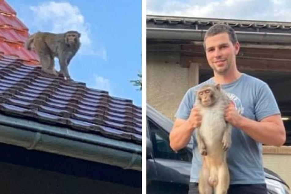 Er schmort noch in Quarantäne: Was wird jetzt aus dem Ausreißer-Affen?