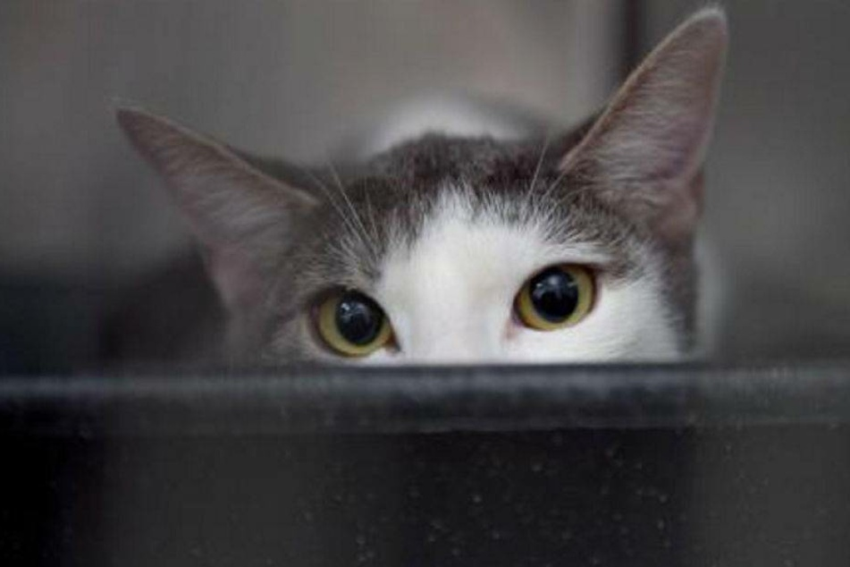 Katze stirbt nach Schuss in den Rücken