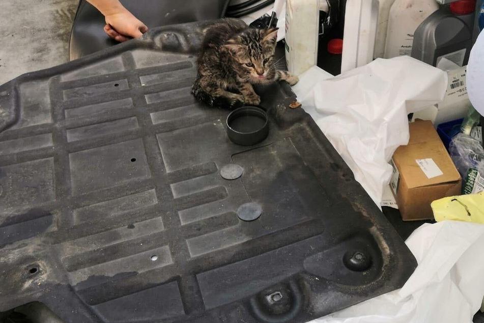 Diese kleine Kätzchen hat sich in einem Motorraum versteckt.