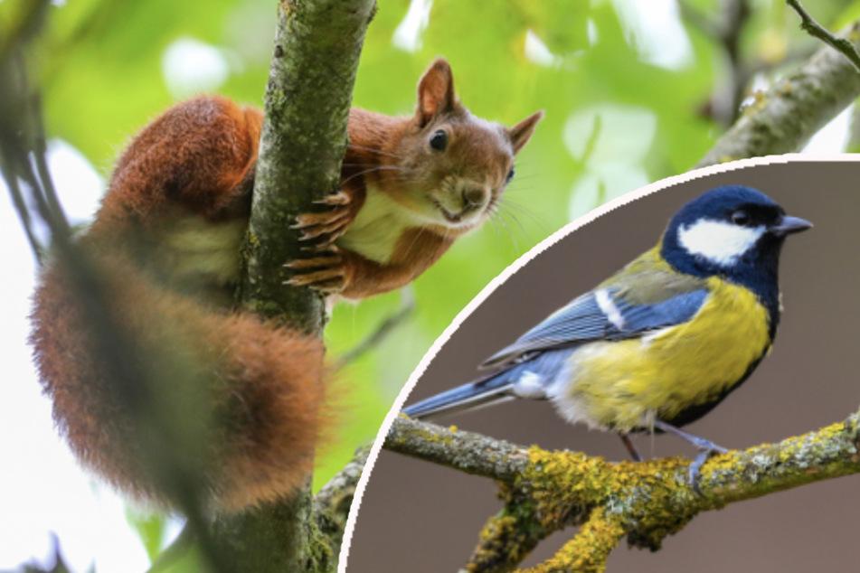 """Eichhörnchen-App und """"Vogelphilipp"""": Das interessiert die Menschen jetzt mehr denn je"""