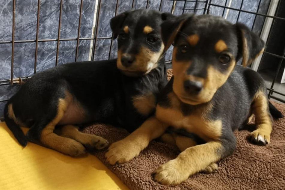 Betrunkener Mann will Hunde-Welpen mit Plastiktüte töten