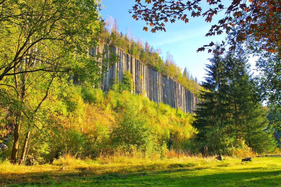 Die Basaltsäulen am Scheibenberg.