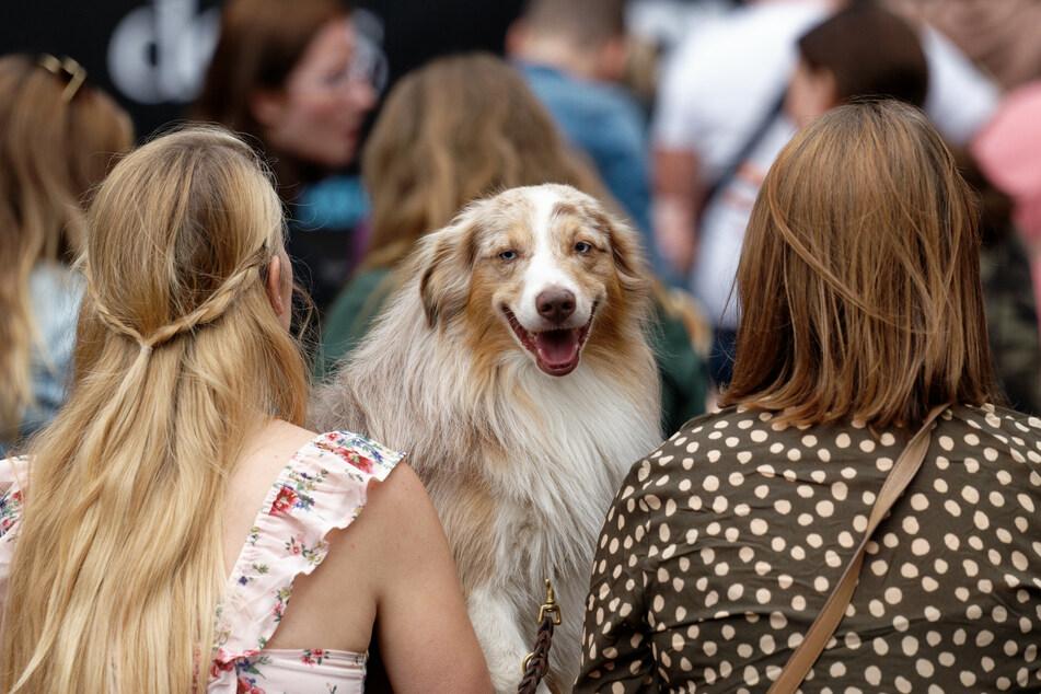"""Bei den """"German Petfluencer Awards"""" waren Hunde im Publikum ausdrücklich erwünscht."""