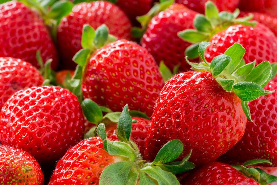 Erdbeeren punkten auch mit vielen Vitaminen und Mineralstoffen. 100 Gramm von den roten Früchtchen weisen mehr Vitamin C auf als Zitronen oder Orangen. (Symbolbild)