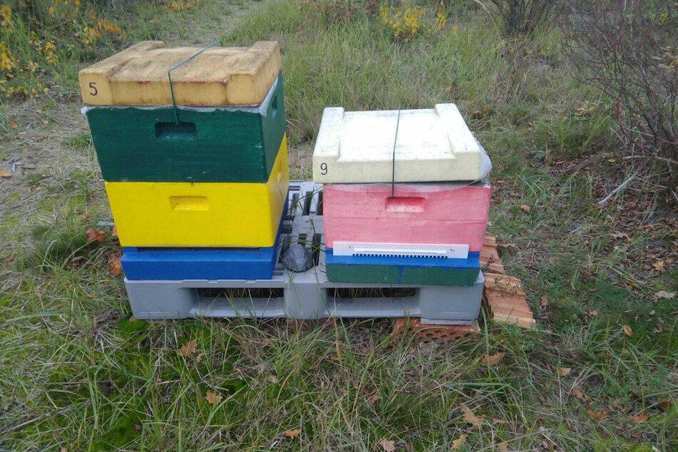 Das gestohlene Bienenvolk befand sich in einer vergleichbaren Kiste - die abgebildeten Kisten umfassen die noch vorhandenen Völker der Plantage.
