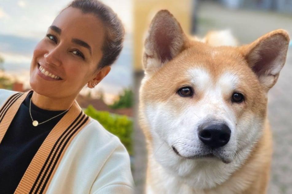 Jana Ina Zarrella (43) setzt sich in einer Instagram-Story für Hachiko, den Neuzugang im Tierheim Köln-Dellbrück ein. (Fotomontage)