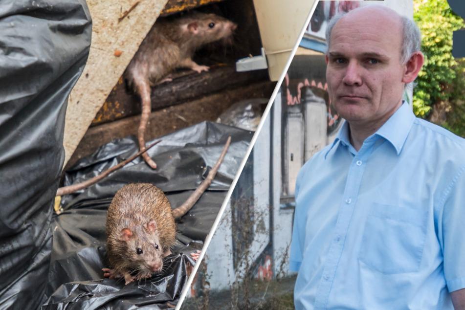 Ratten-Alarm in Chemnitz! Anwohner beschweren sich über Müll, Schädlinge und Kot