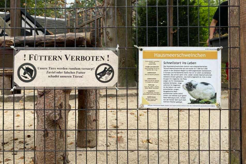"""Mittlerweile hat der Zoo der Minis an fast jedem Gehege ein """"Füttern verboten""""-Schild angebracht."""