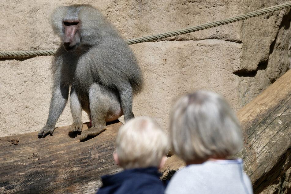 Der Kölner Zoo öffnet wieder für Besucher, allerdings nur unter strengen Corona-Regeln. (Archivfoto)