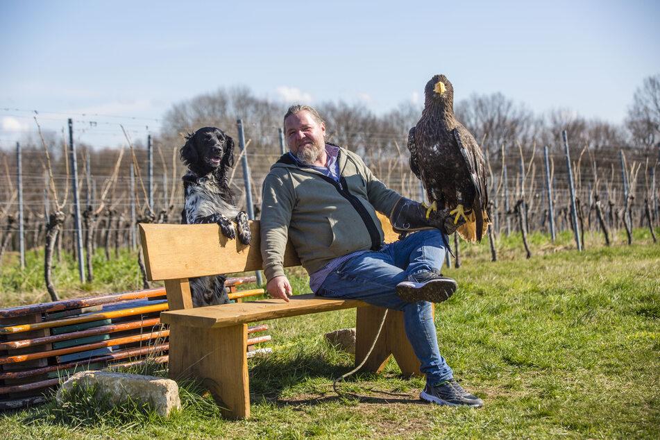 Schaaf kann nicht nur mit Vögeln, sondern auch mit Hunden: Münsterländer Bonzo (5) hört -meist- aufs Wort.