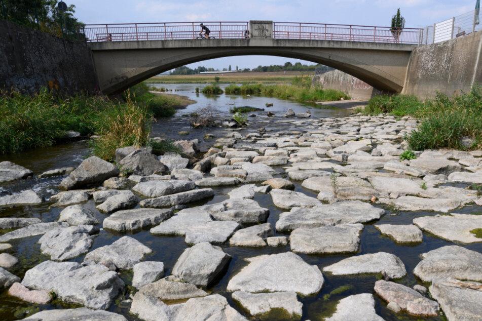 Sachsen, Dresden: Wenig Wasser führt die Weißeritz an der Mündung zur Elbe.