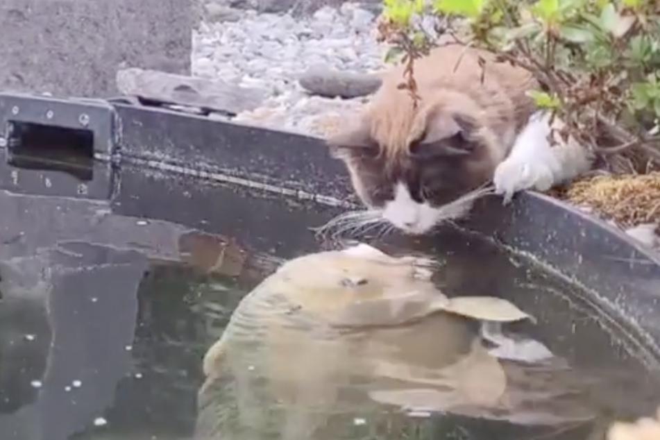 Außergewöhnliche Freundschaft: Diese Katze küsst gern Fische!