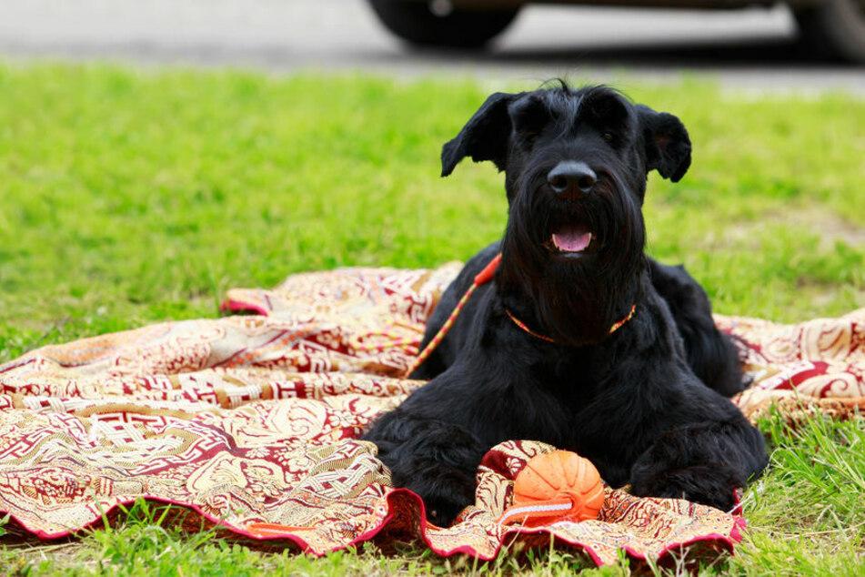 Hund wird im Garten plötzlich ohnmächtig: Der Grund ist amüsant