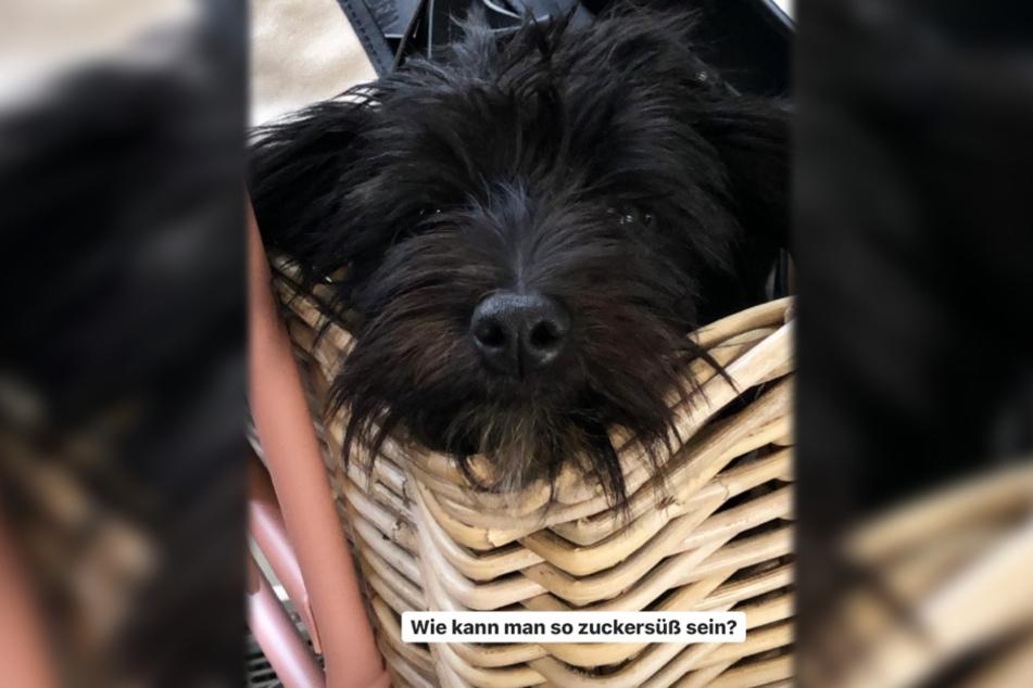 Dieser Instagram-Screenshot zeigt die Hunde-Dame Kalia, das Haustier von Ex-GNTM-Kandidatin Larissa Neumann.