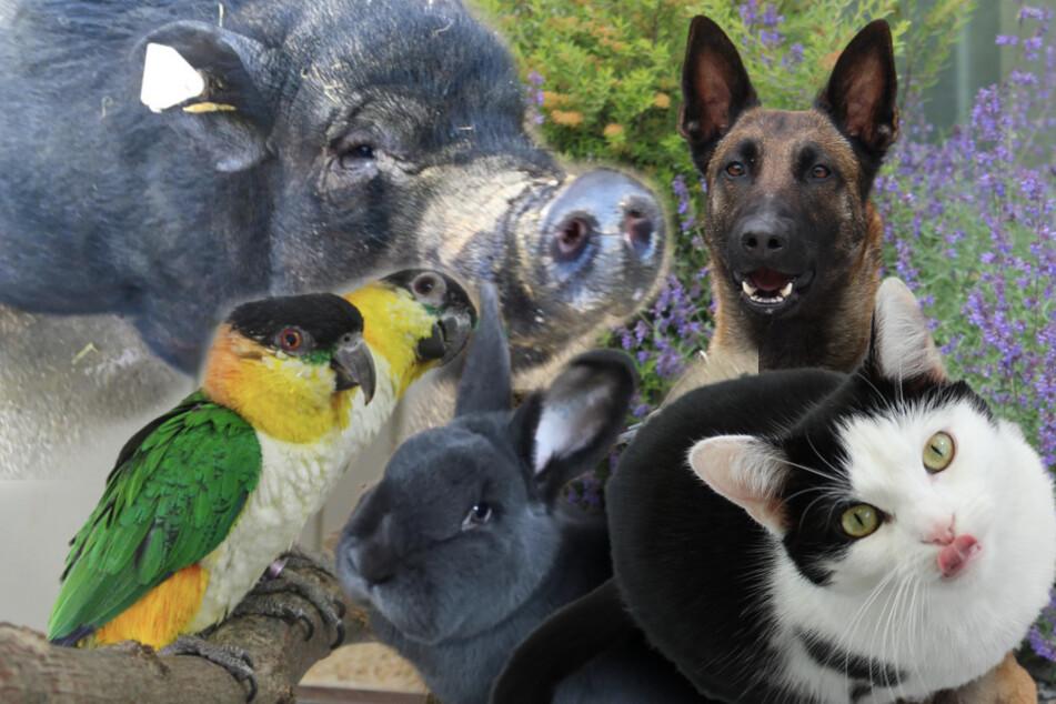 6 besondere Tiere: Hund, Katze und Minischwein suchen dringen ein Zuhause
