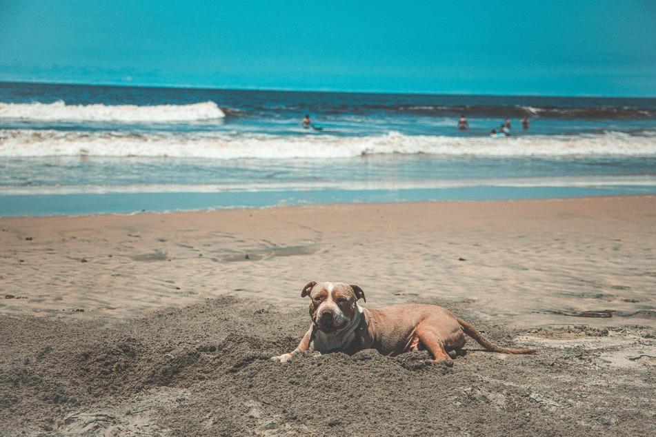 Hunde müssen auch am Strand einen Schattenplatz zur Verfügung gestellt bekommen.