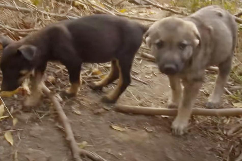 Frauen finden zwei Hunde im Park: Dabei fällt ihnen eine Sache sofort auf