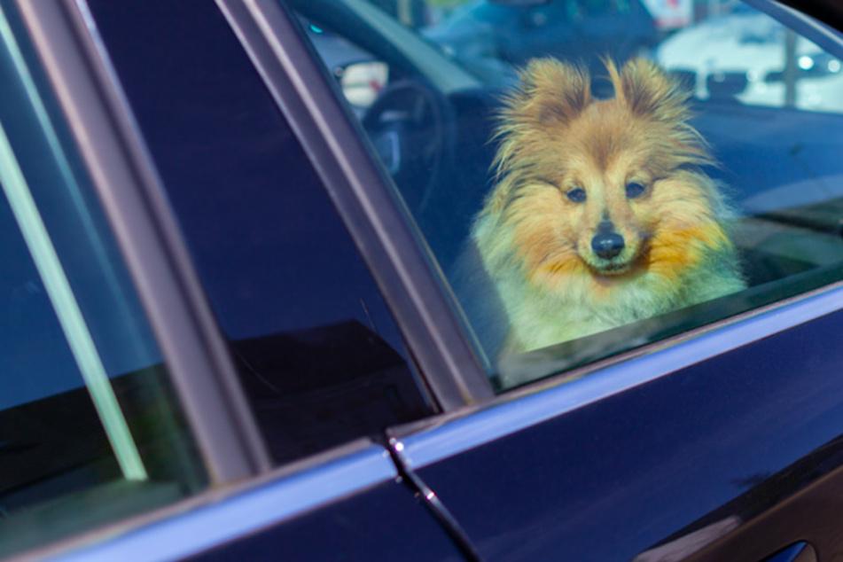 Bis zu 60 Grad im Auto! Hilft Lackfarbe oder Fenster öffnen? ADAC deckt Mythen auf