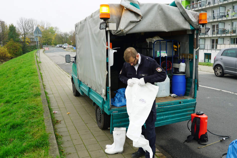 Vogelgrippe-Fall in Hamburg? Schwanenvater Olaf Nieß rückt aus