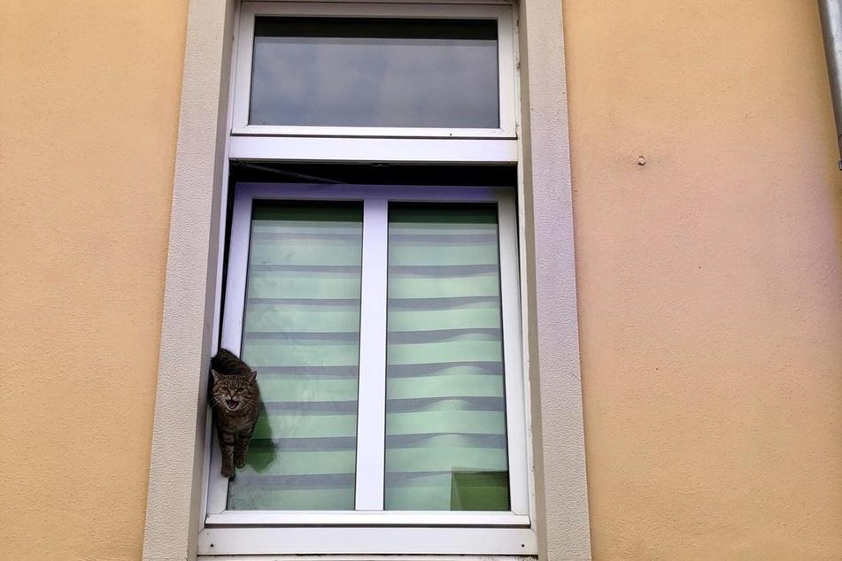 Am Freitag steckte in Grimma eine Katze in einem gekippten Fenster fest.