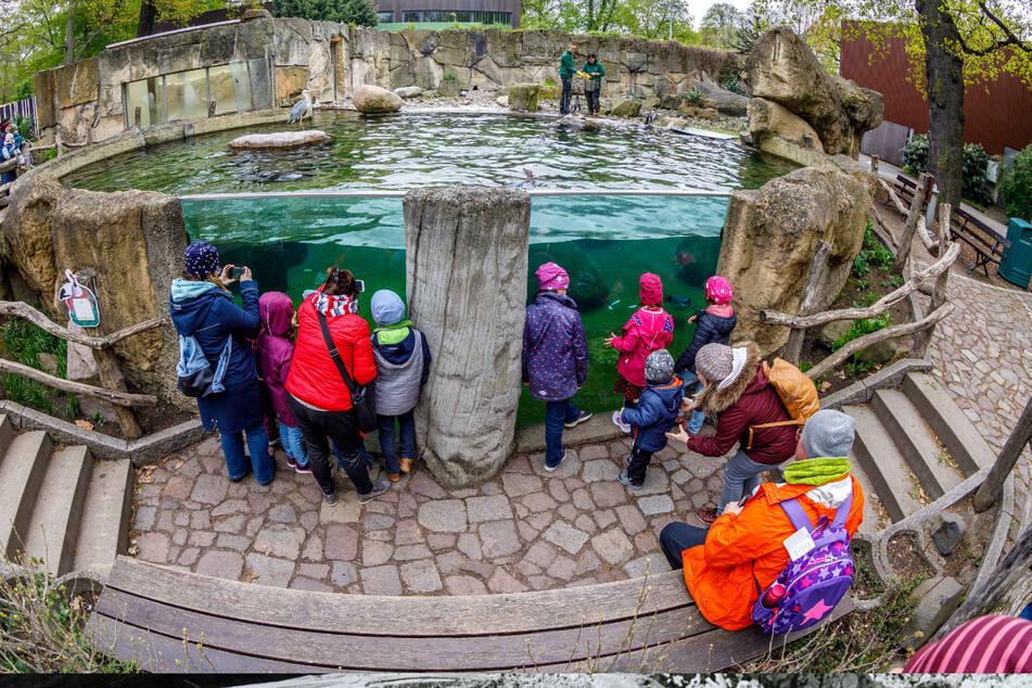 Die Pinguine gehören zu den Besucherlieblingen.