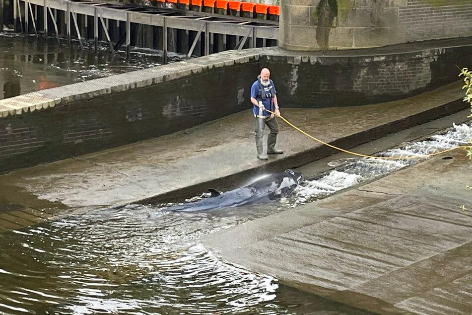 Ein Mann besprühte den Wal.