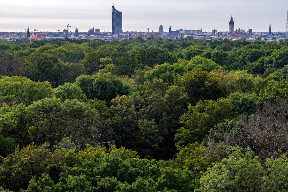 Trockenheit bedroht europaweit einzigartigen Leipziger Auwald
