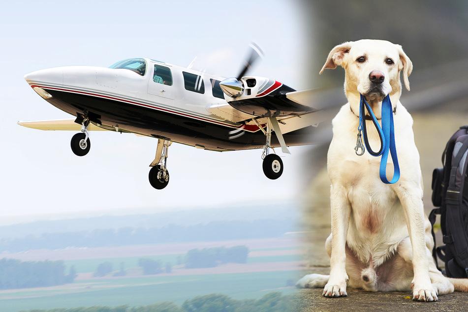 Hunde sollen zu ihren Besitzern: Sonderflug nur für Tiere!