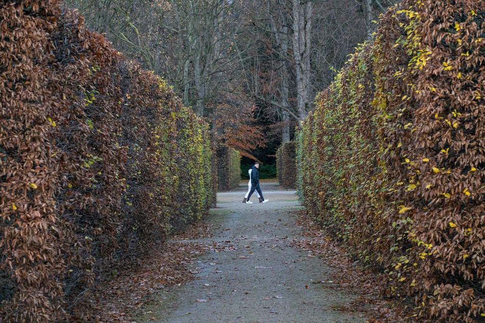 Der Schlosspark Pillnitz.