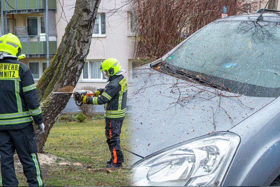 Umgeknickte Bäume und kurzes Winter-Comeback: Heftiger Sturm zieht über Sachsen