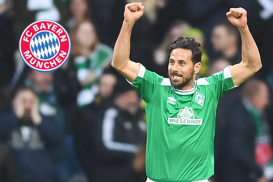 Ein drittes Mal zu Bayern? Pizarro schließt Rückkehr nicht aus