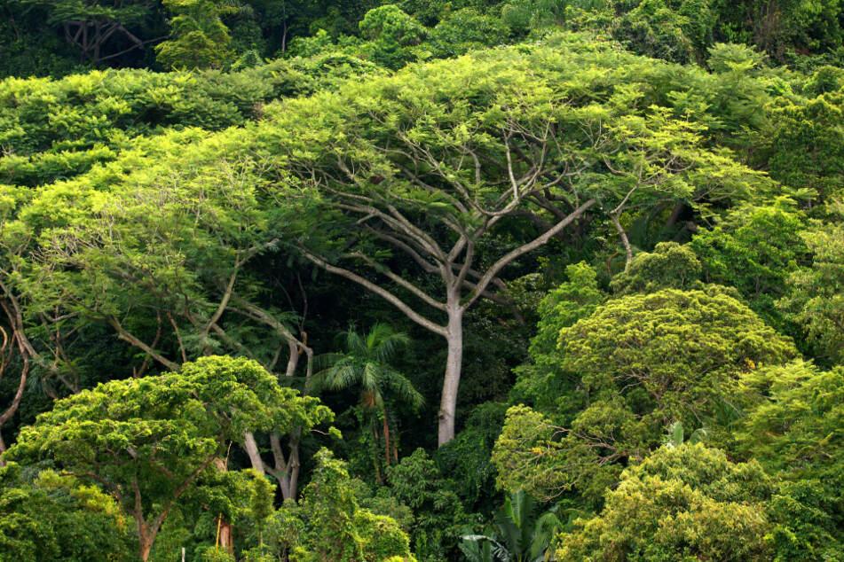 Immer weniger große Tierarten in Regenwäldern: Die Folgen sind dramatisch!