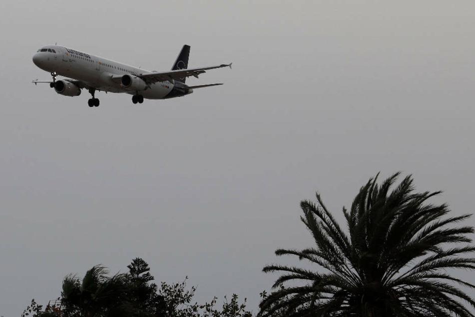 Ab dem 6. Juni will auch die Lufthansa selbst wieder auf die liebste Ferieninsel der Deutschen fliegen (Archivbild).