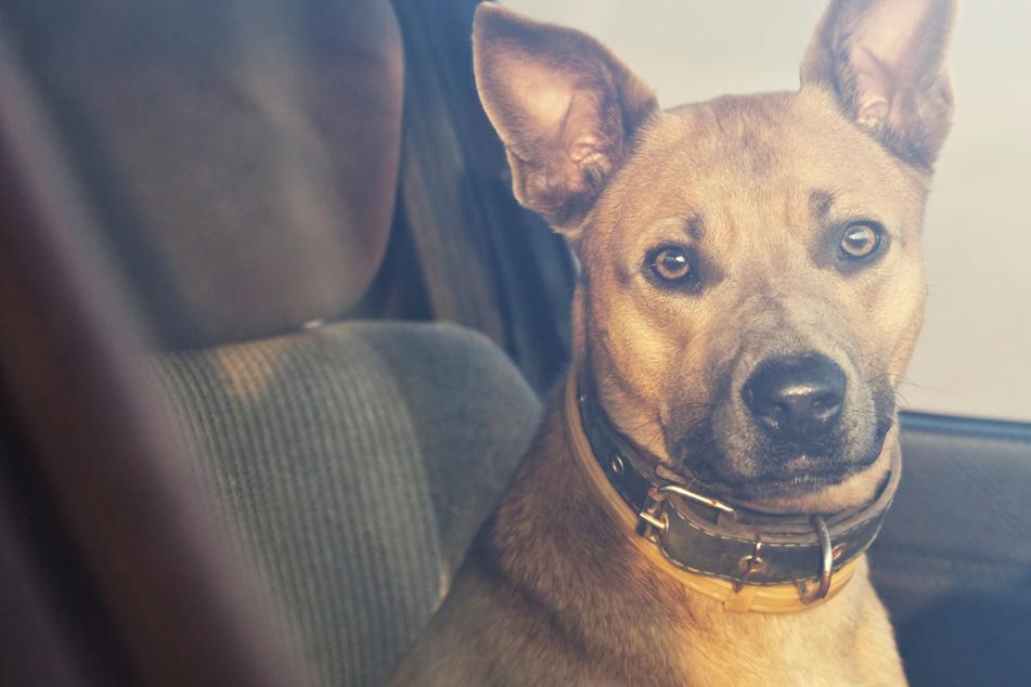 Hund in heißem Auto eingesperrt, doch dann passiert etwas Rätselhaftes