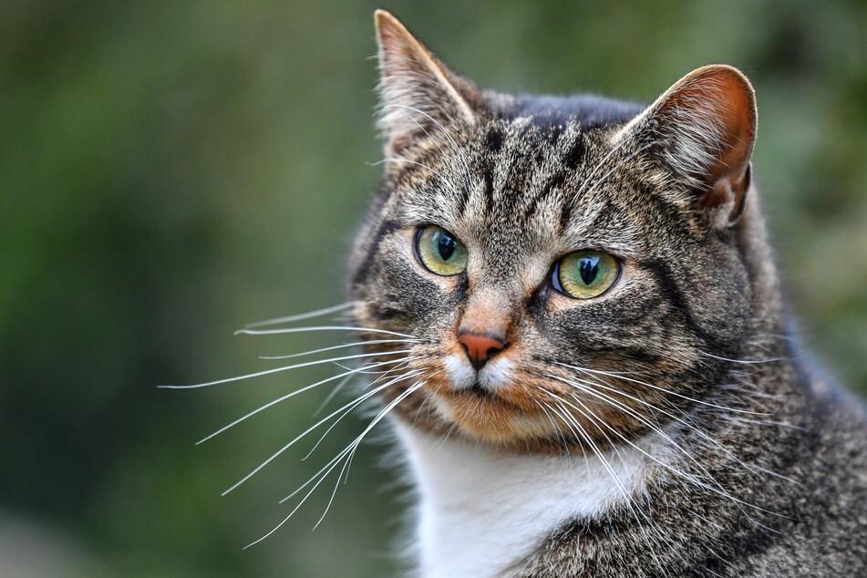 Polizei alarmiert! Immer mehr Katzen verschwinden aus dieser Gemeinde