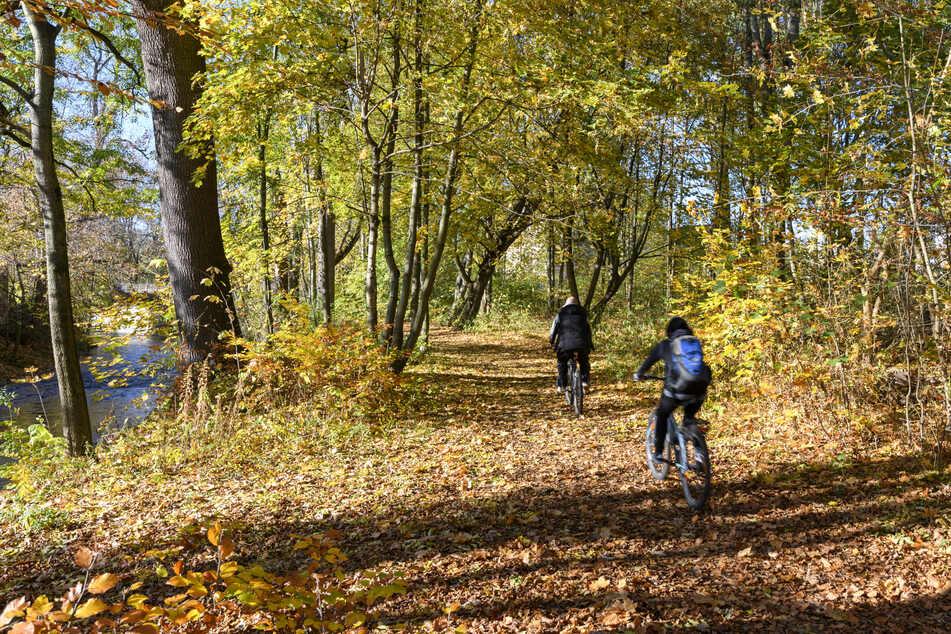 Chemnitz: Vorsicht bei Spaziergängen! Baumsterben im Chemnitzer Wasserwerkspark