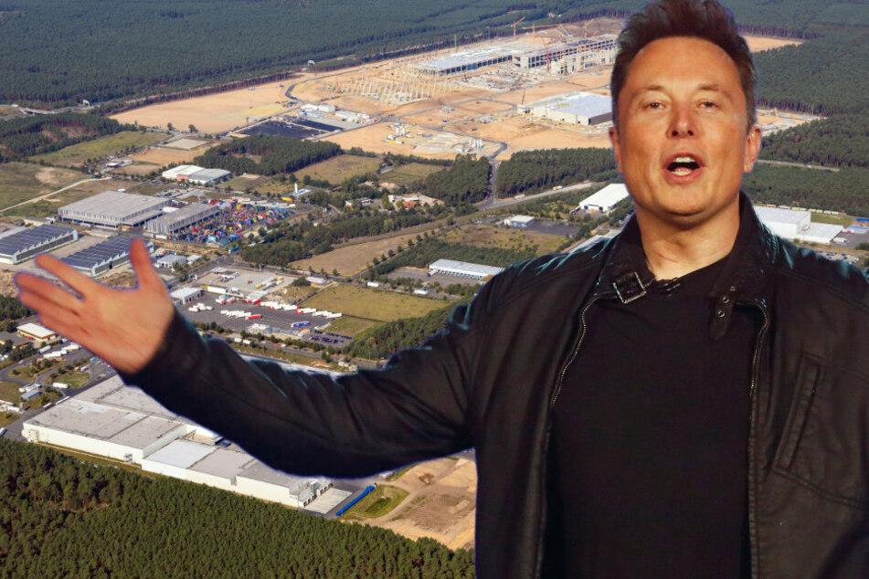 Tesla-Chef Elon Musk will mit Gigafactory weltgrößte Batteriefabrik gründen