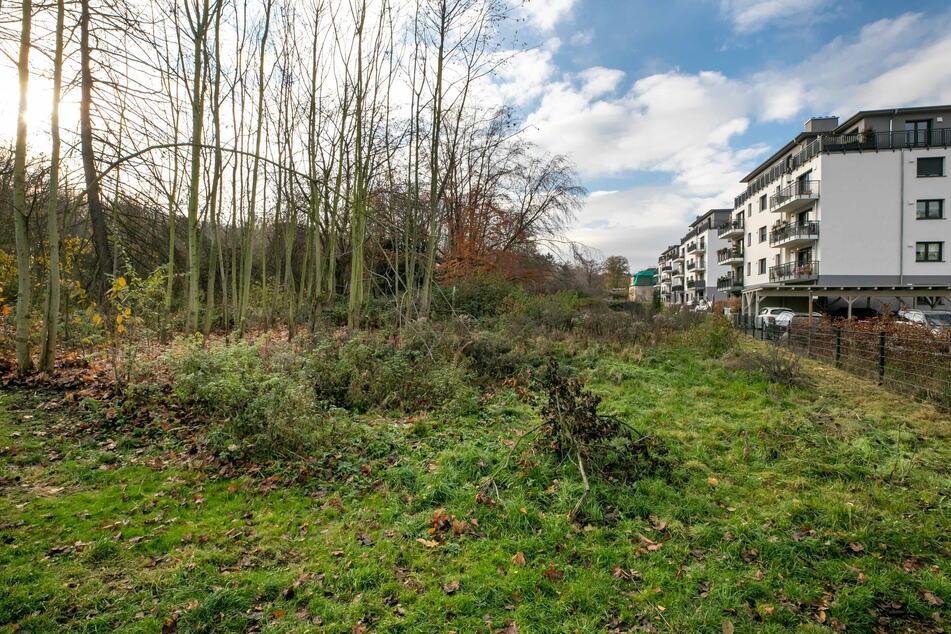 Der Stadtbezirksbeirat Cotta hat gegen eine Bebauung des Wäldchens am Leutewitzer Park gestimmt.