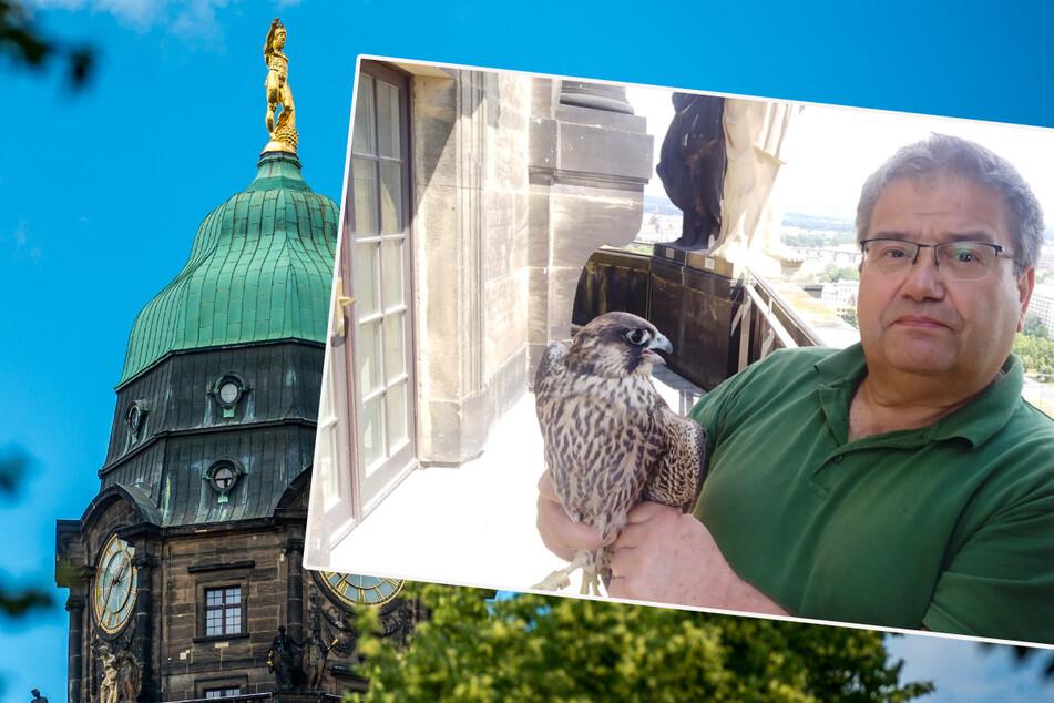 Absturz-Drama um Rathaus-Falken: Schnellster Vogel der Welt schielte plötzlich