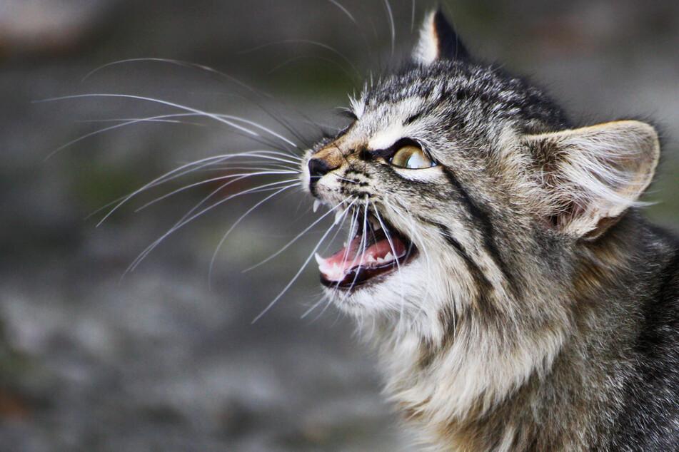 Polizisten erschießen mehrere Katzen auf Terrasse!