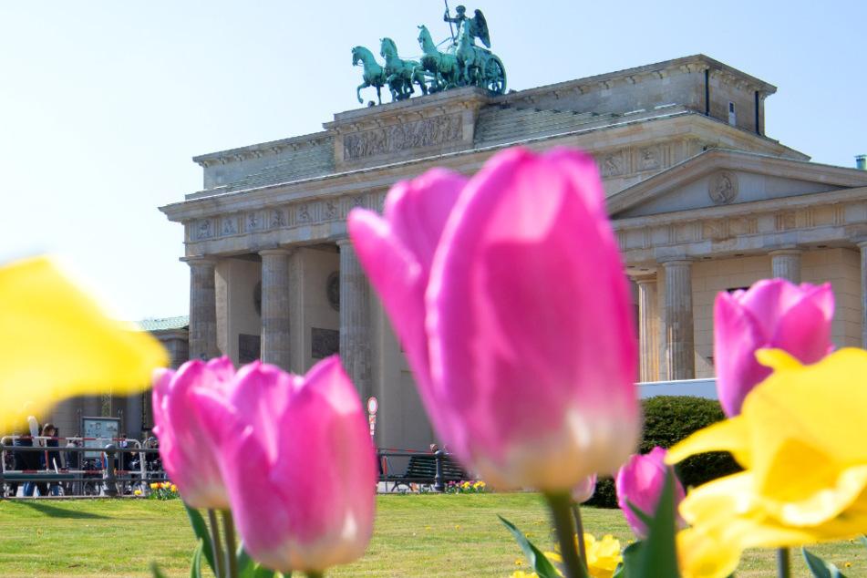 Bis zu 19 Grad! Der Lenz hält Einzug in Berlin und Brandenburg