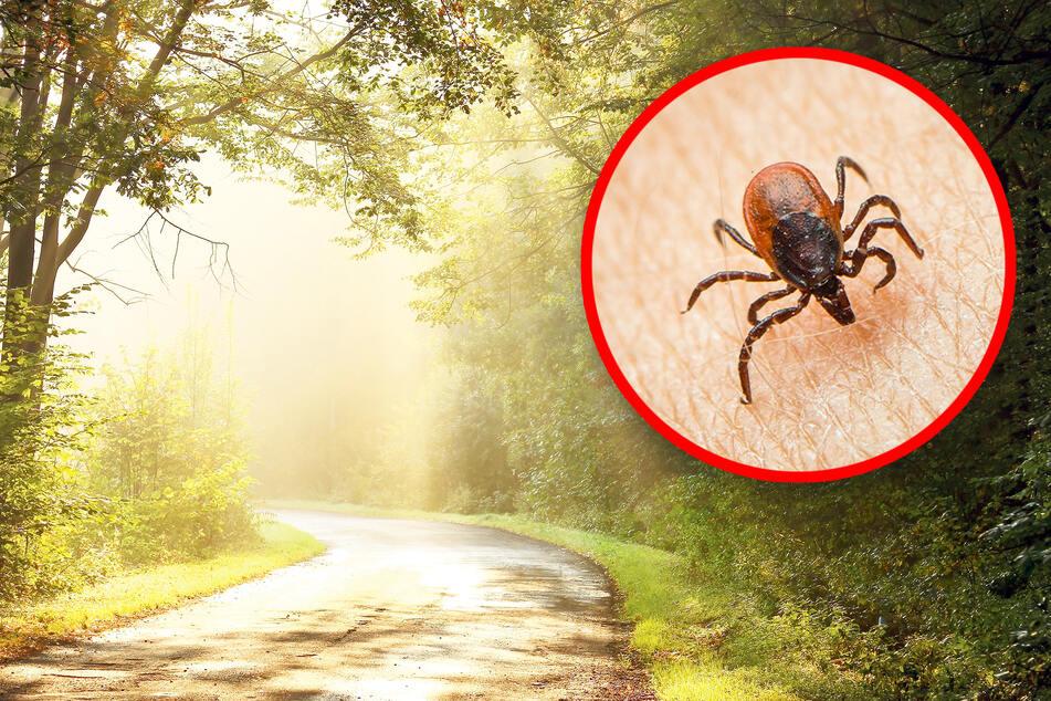 Zecken-Gefahr: So schützt Du Dich vor den fiesen Blutsaugern