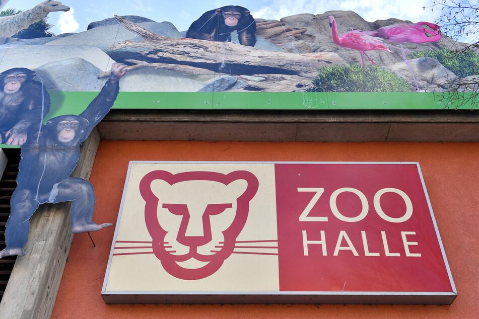 Der Bergzoo in Halle öffnet ab Samstag wieder seine Pforten für Euch. (Archivbild)